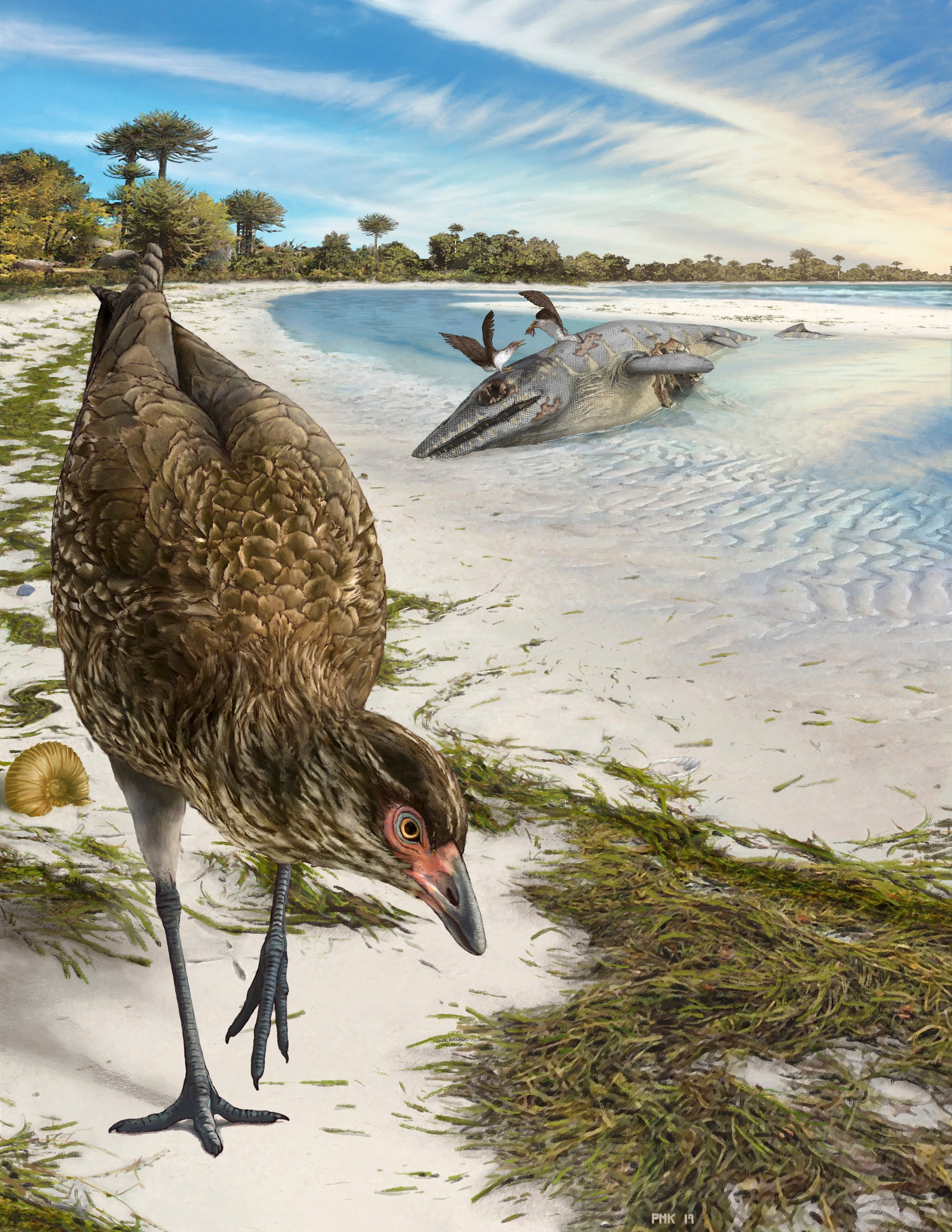 This illustration by Phillip Krzeminski provided by researchers in March 2020 shows the world's oldest modern bird, Asteriornis maastrichtensis, nicknamed the