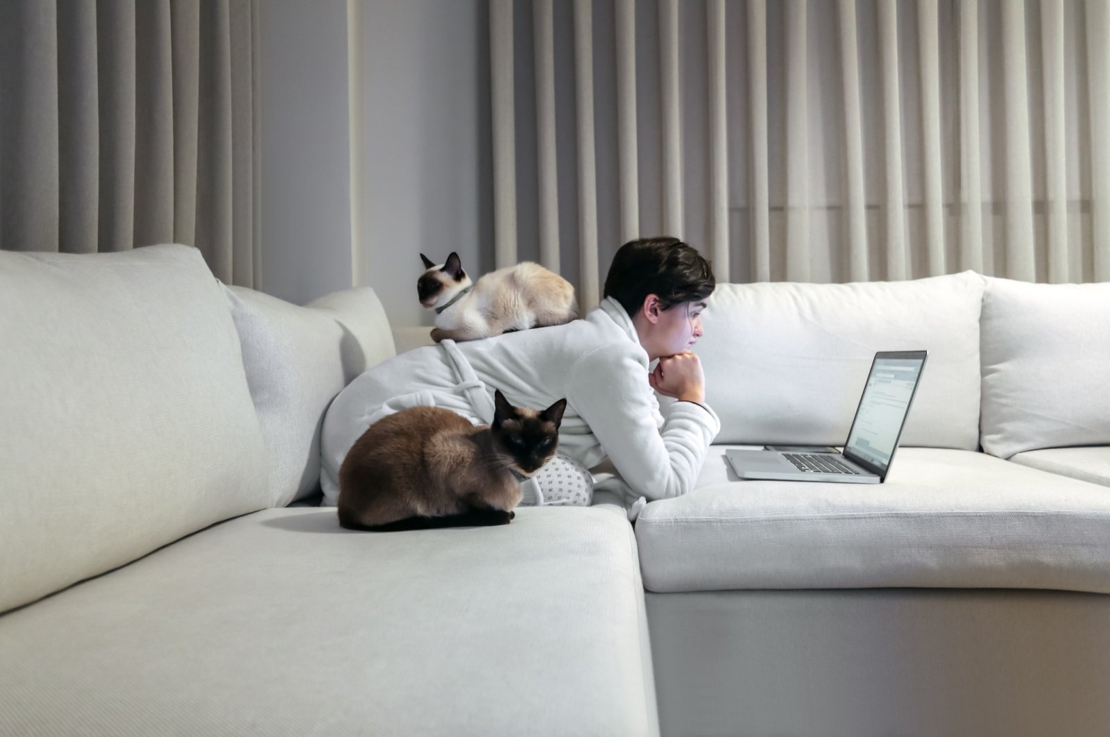 With many working from home in an attempt to self-isolate, their cats are taking advantage of the extra attention. (Stock Photo)