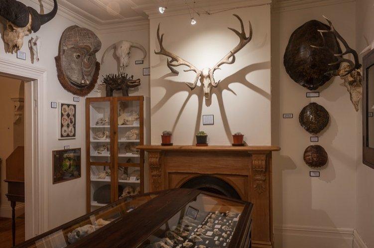 Some bone works at New Zealand artist Bruce Mahalski's villa-turned-museum. (DPA Photo)