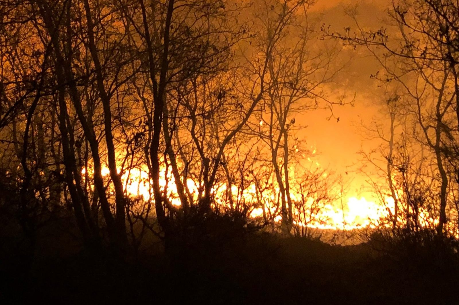 Flames engulf a forest, in Manisa province, Turkey, Friday, March 20, 2020. (İHA Photo)