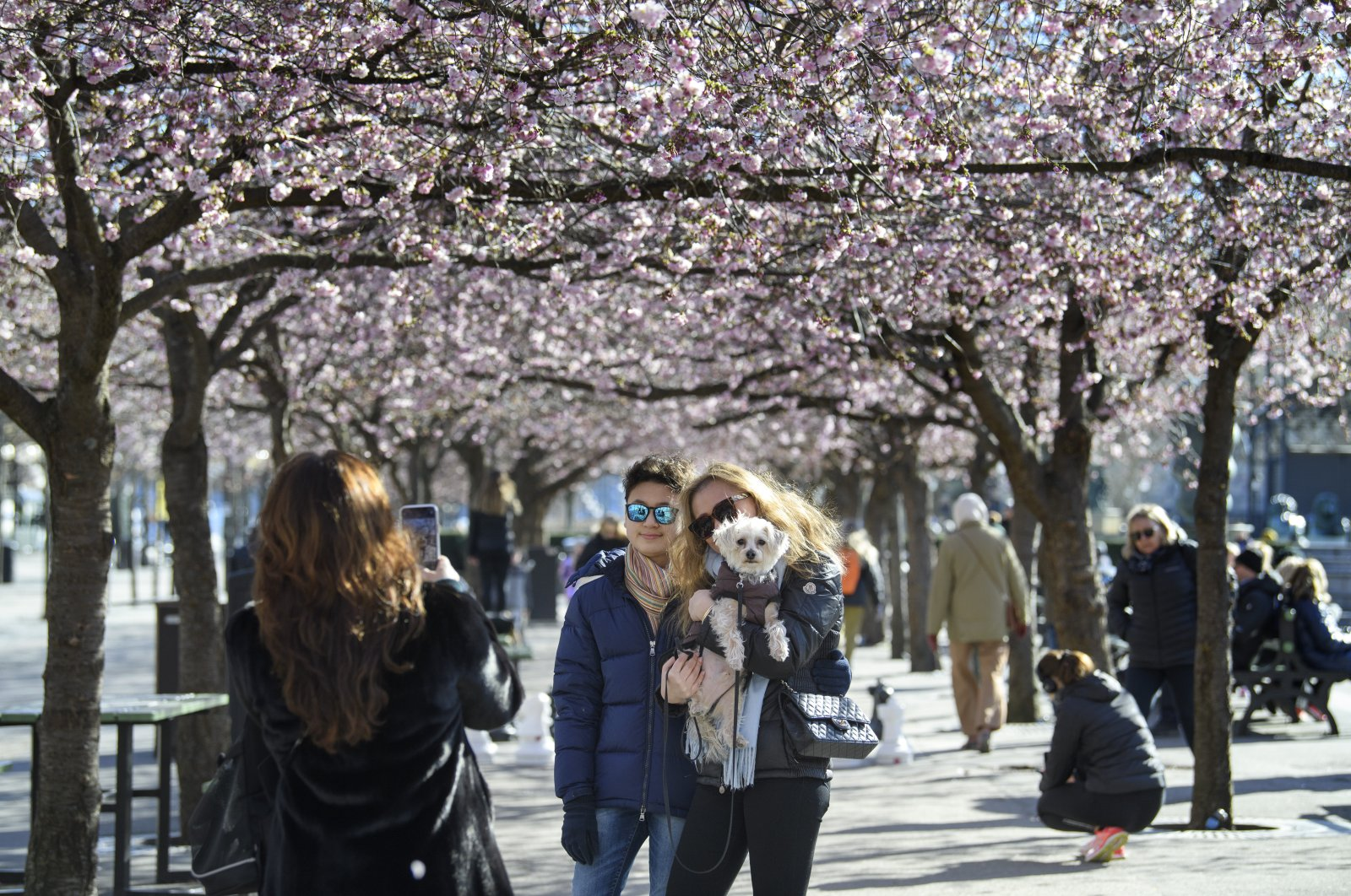 People pose for a photo while strolling with others among the blooming cherry trees in Kungstradgarden park, Stockholm, March 22, 2020. (AP Photo)