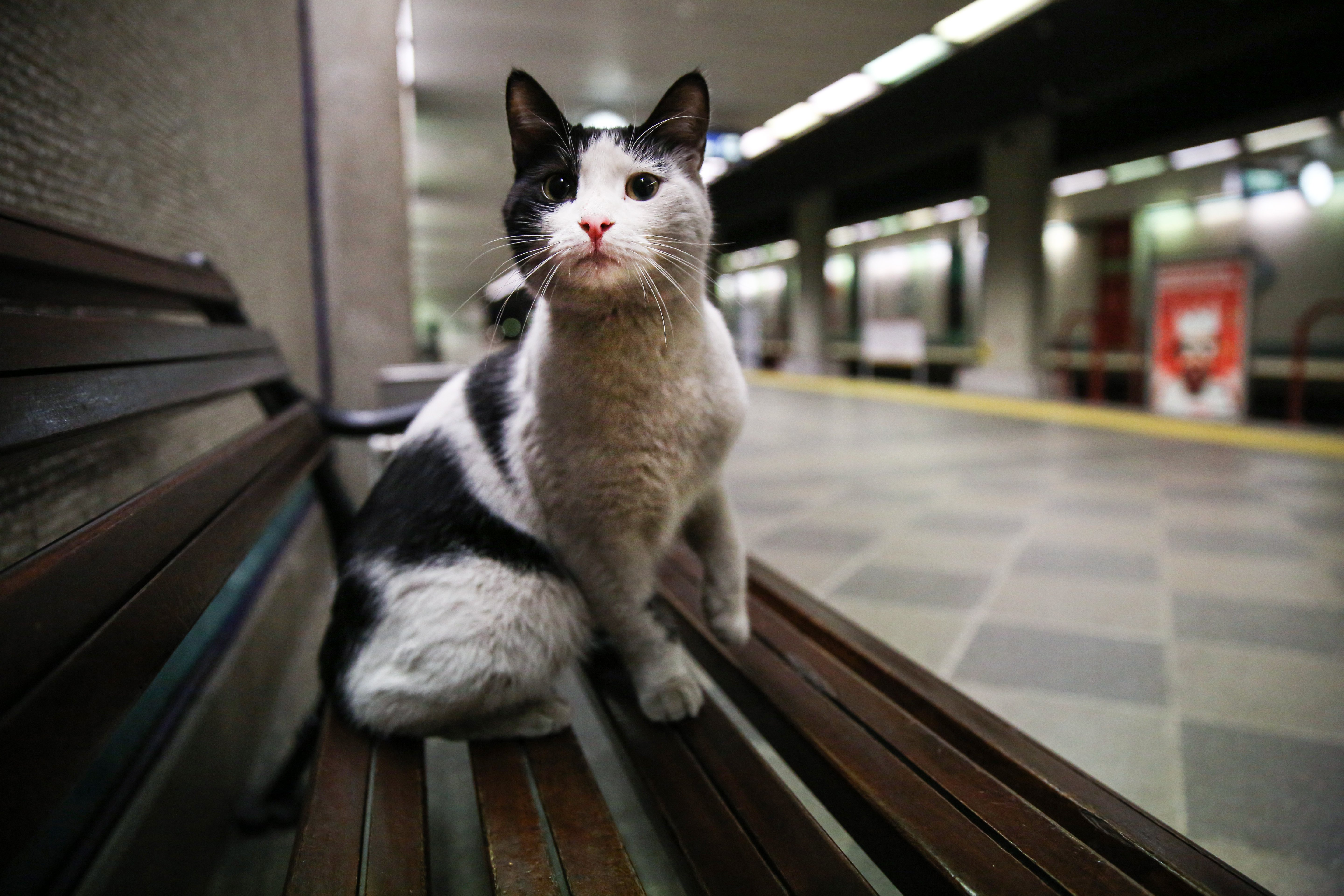 Empty metro stations make for great resting places for the felines. (AA Photo)