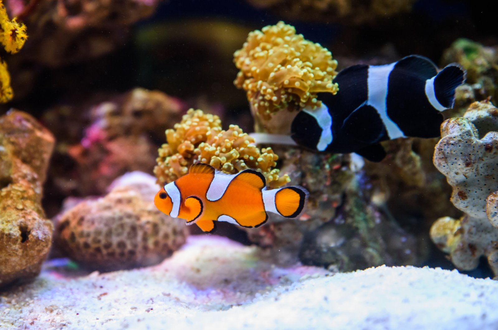 Hand sanitizing gels are great for hygiene, but they can be lethal to fish in aquariums. (iStock Photo)