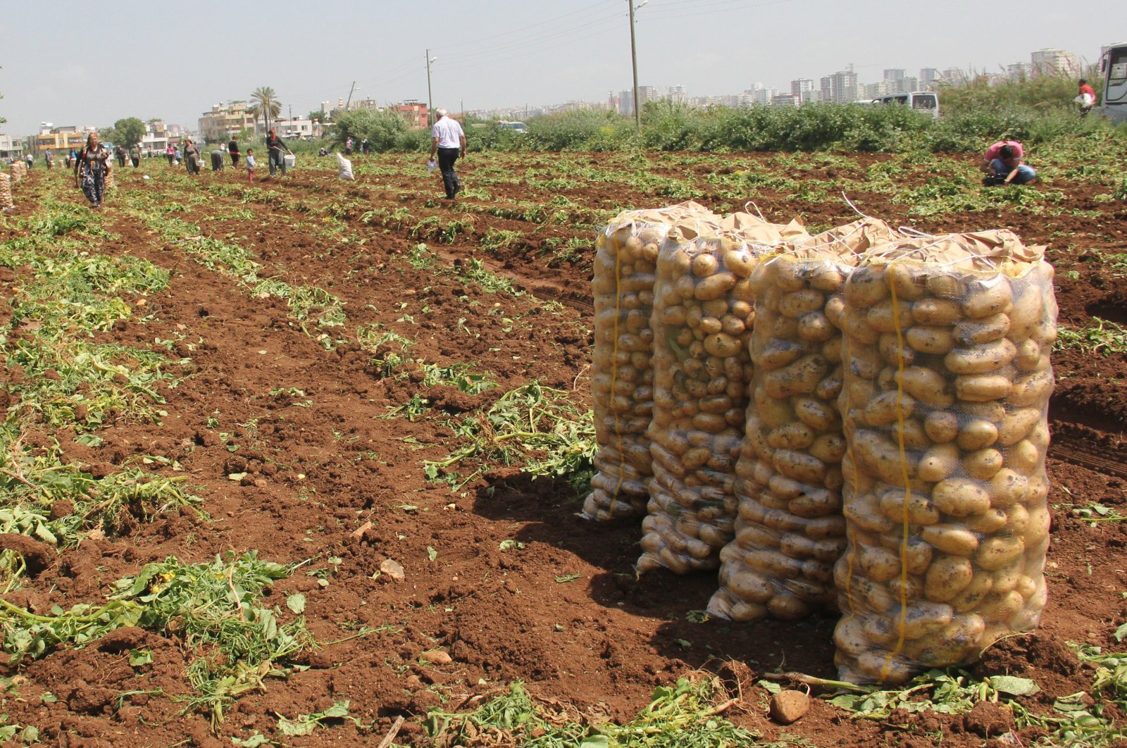 Safety measures at farms, greenhouses and gardens will be inspected by officials. (IHA Photo)