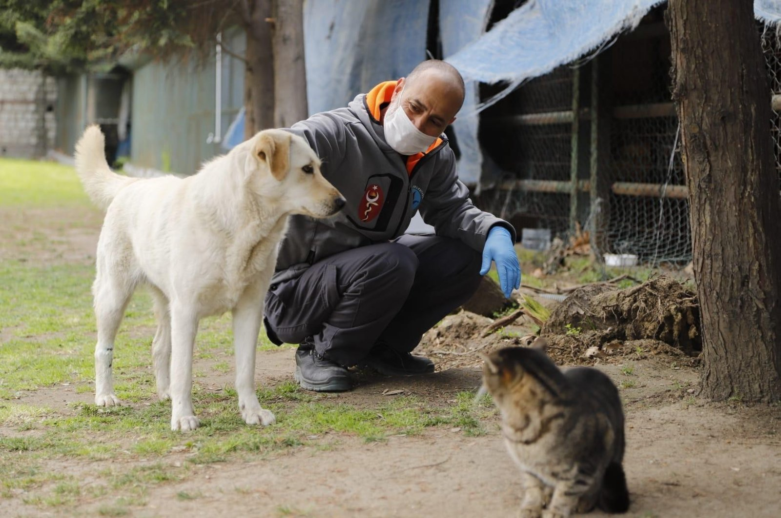 A Kağıthane Municipality worker feeds stray animals as streets remain deserted during the coronavirus outbreak, Istanbul, March 3, 2020. (İHA Photo)