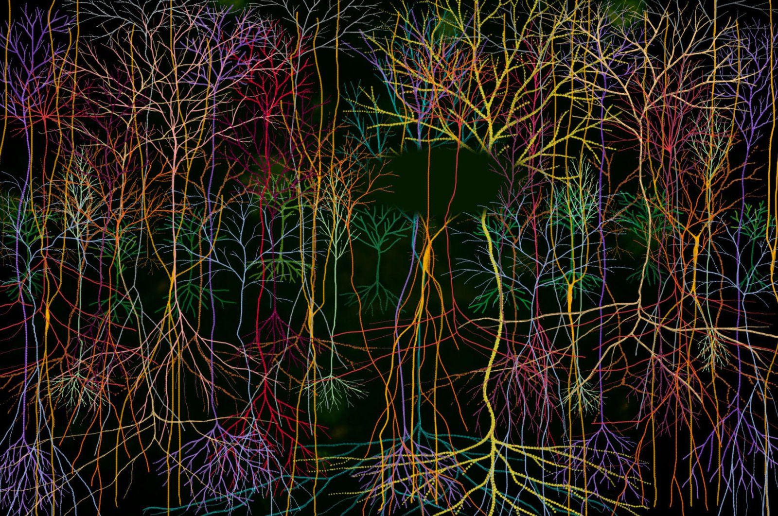 """""""Magic Forest"""" slide dissolve installation by Andrew Carnie is one of the works in the online catalog, """"Fundamentally Human: Contemporary Art and Neuroscience."""""""