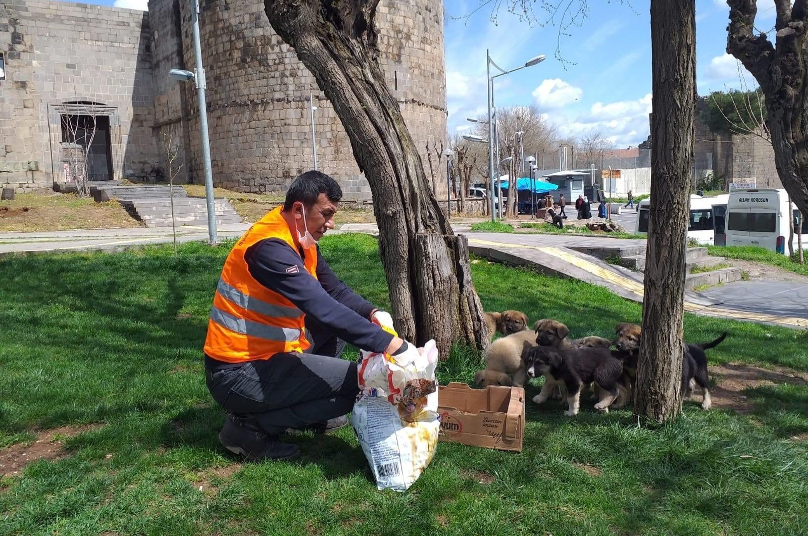A municipal worker feeds stray puppies in a grassy area of Diyarbakır, Turkey, Sunday, April 5, 2020. (İHA Photo)