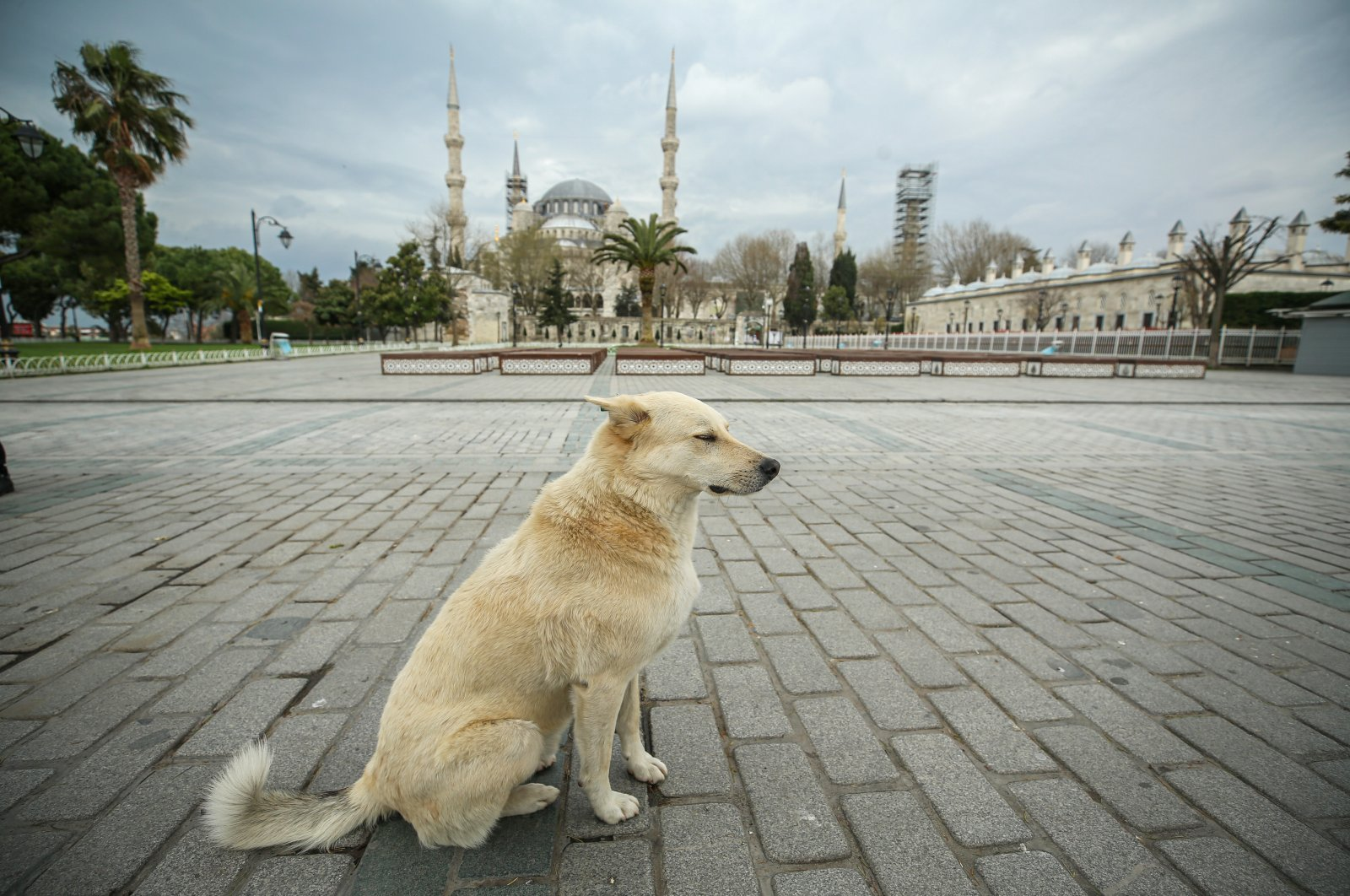 A lonely dog sits at Sultanahmet Square, normally a place bustling with tourists, in Istanbul, Turkey, Monday, April 6, 2020. (AA Photo)