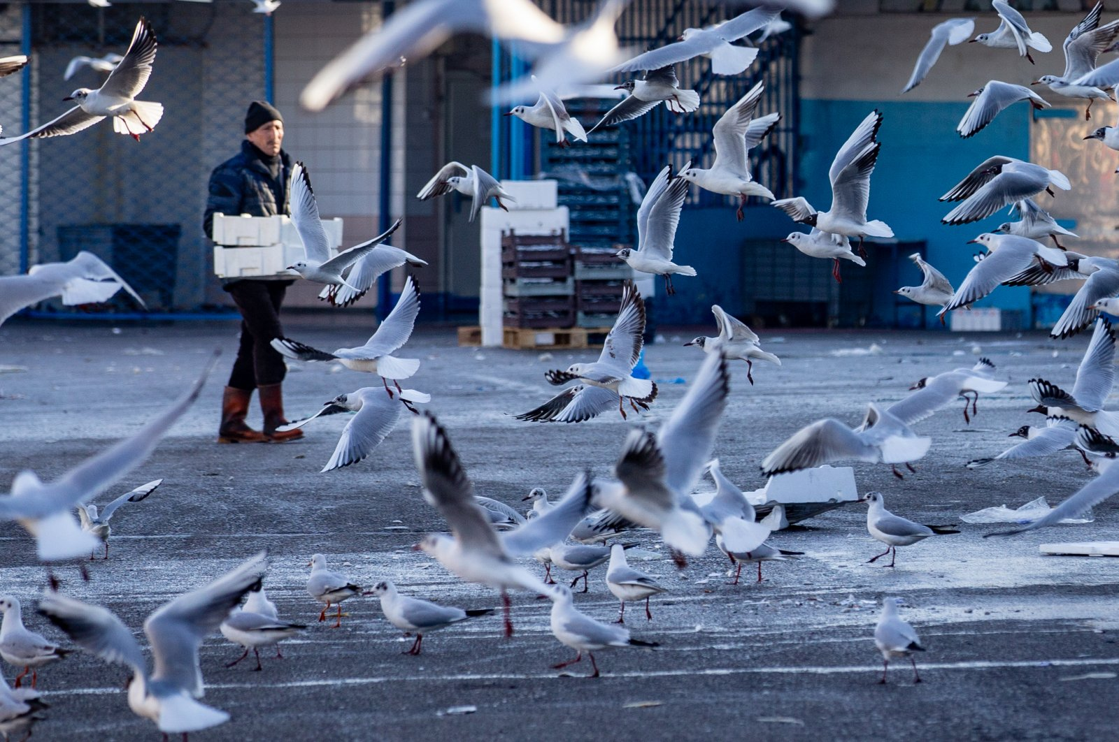 Seagulls looking for food in the fish market, in Ankara, Turkey, Monday, April 6, 2020. (AA Photo)
