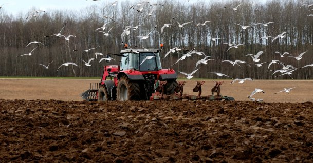 Seagulls take flight as a farmer plows a field in Liepupe, Latvia, Friday, April 3, 2020. (Reuters Photo)