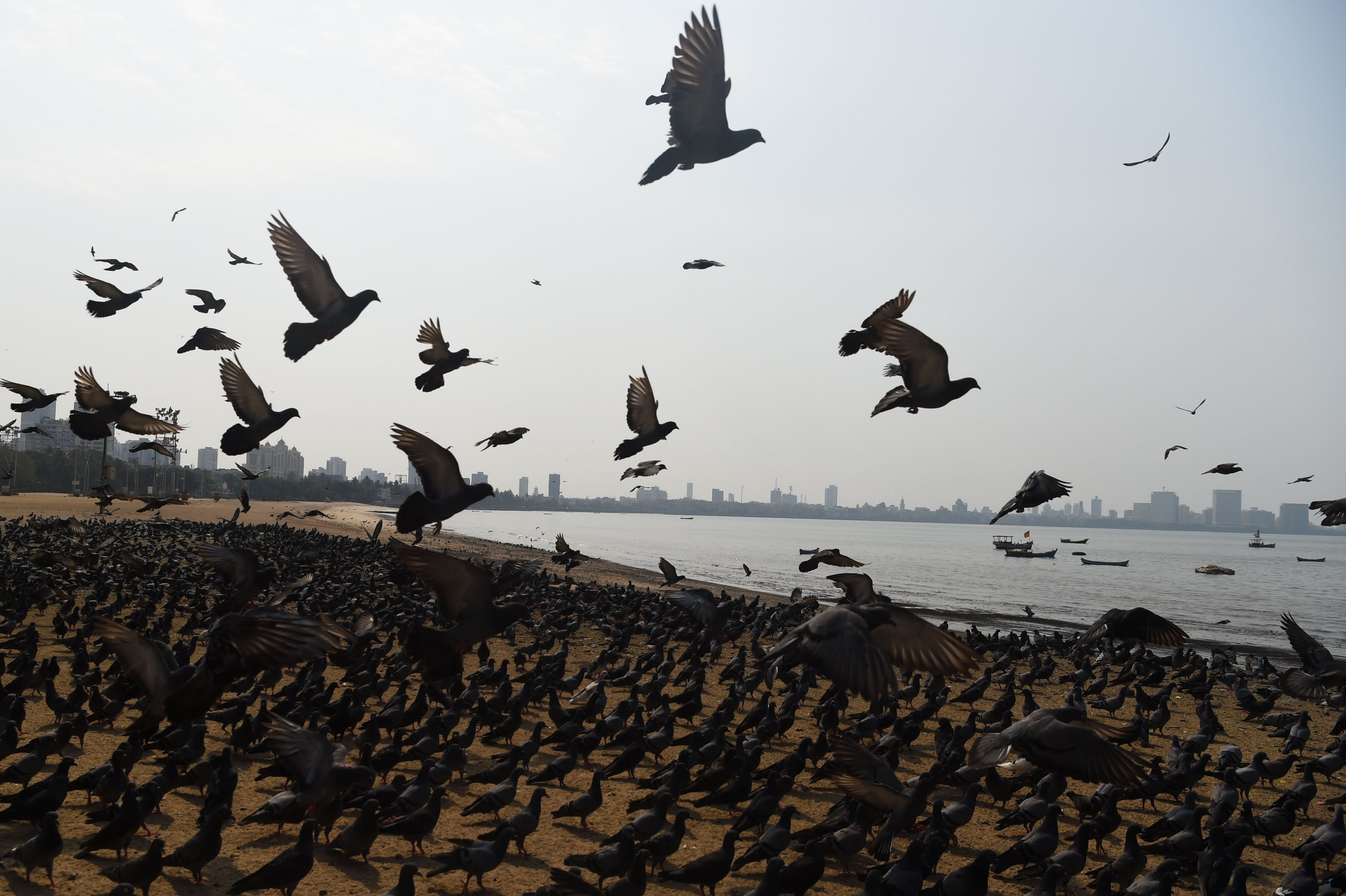 Birds gather on the Chowpatty beach during lockdown in Mumbai, India, March 25, 2020. (AFP Photo)