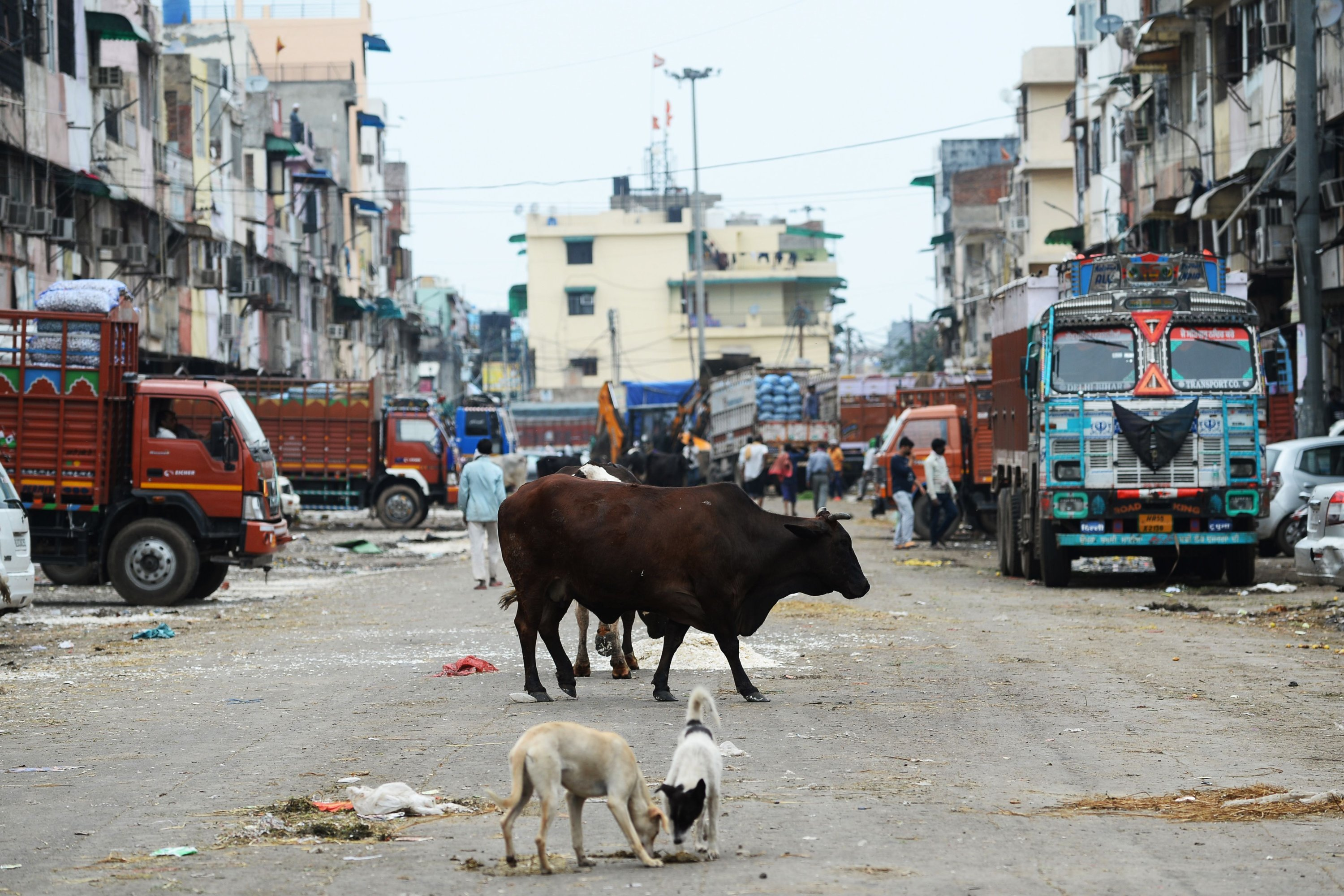 A cow and stray dogs stand along a deserted street during lockdown in New Delhi, India, March 26, 2020. (AFP Photo)