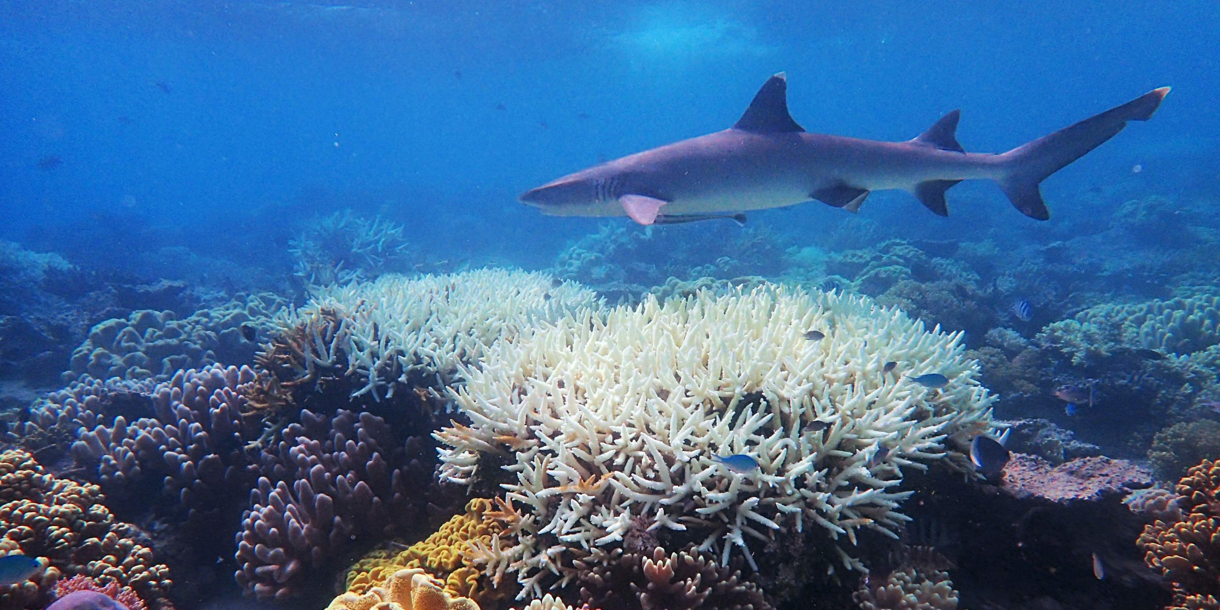 Global warming to cause 'catastrophic' species loss around world, study finds - Daily Sabah