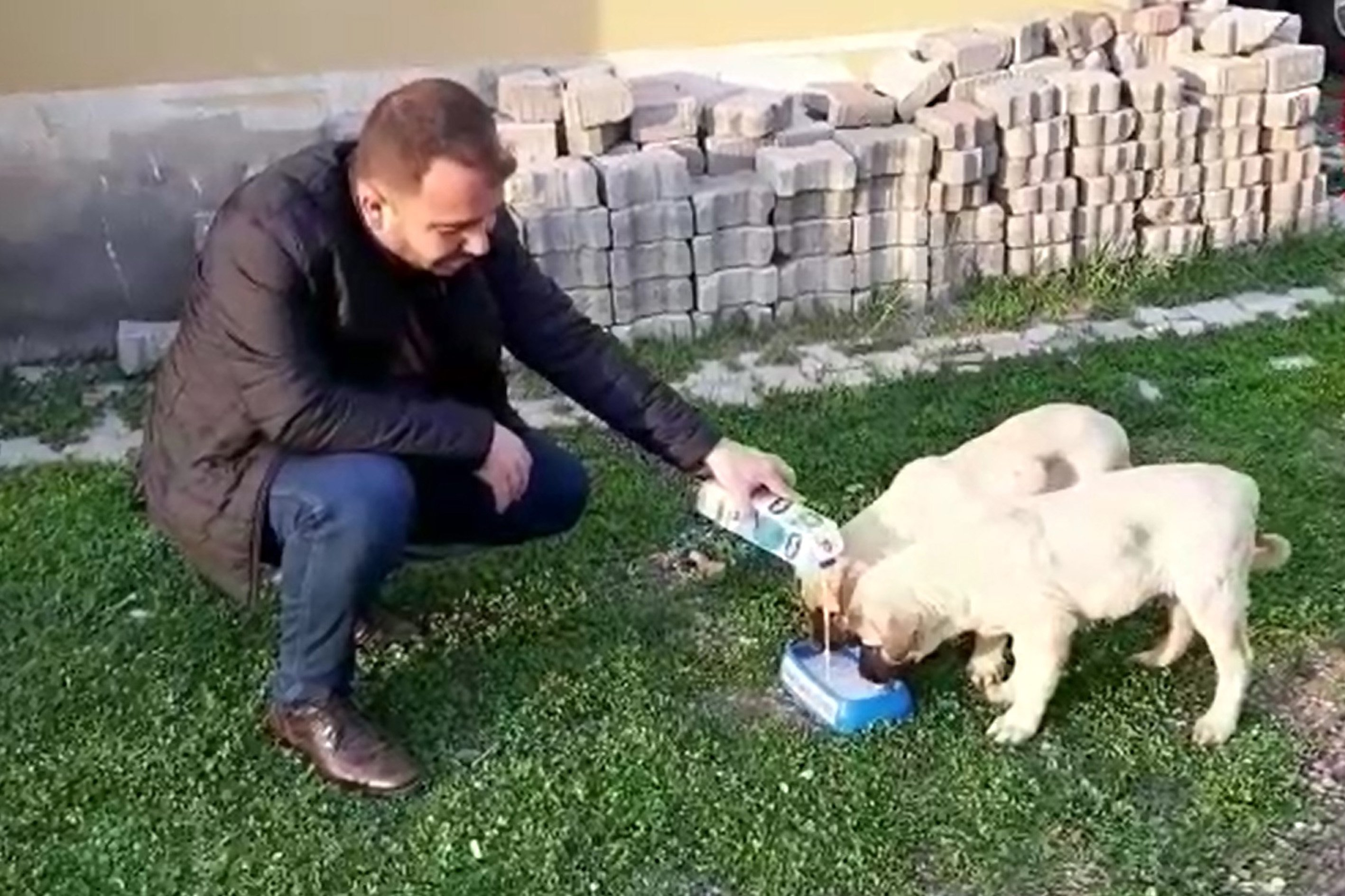 A municipality worker pours milk for stray dogs, in Elazığ province, on April 8, 2020. Many municipalities began providing food and water to street animals to prevent starvation and dehydration. (AA Photo)