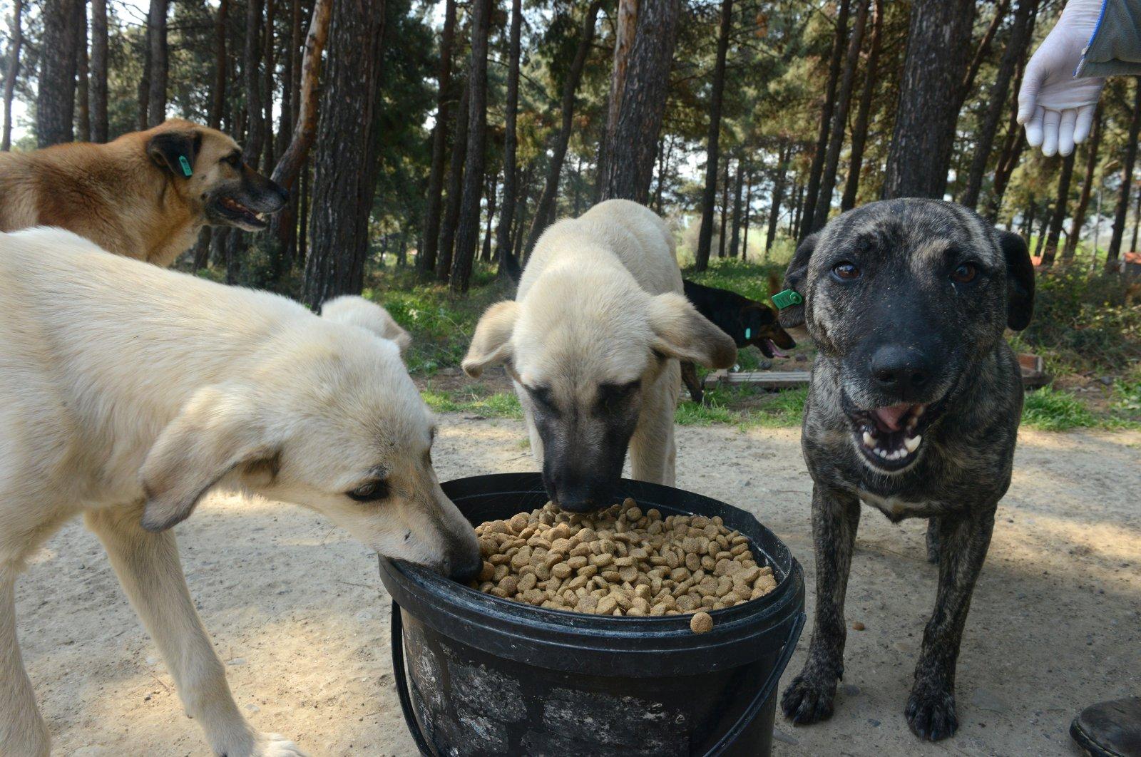 Dogs eat the food left by Necla Varol and Nazife Çoklaş, in Çanakkale, Turkey, April 13, 2020. (AA Photo)
