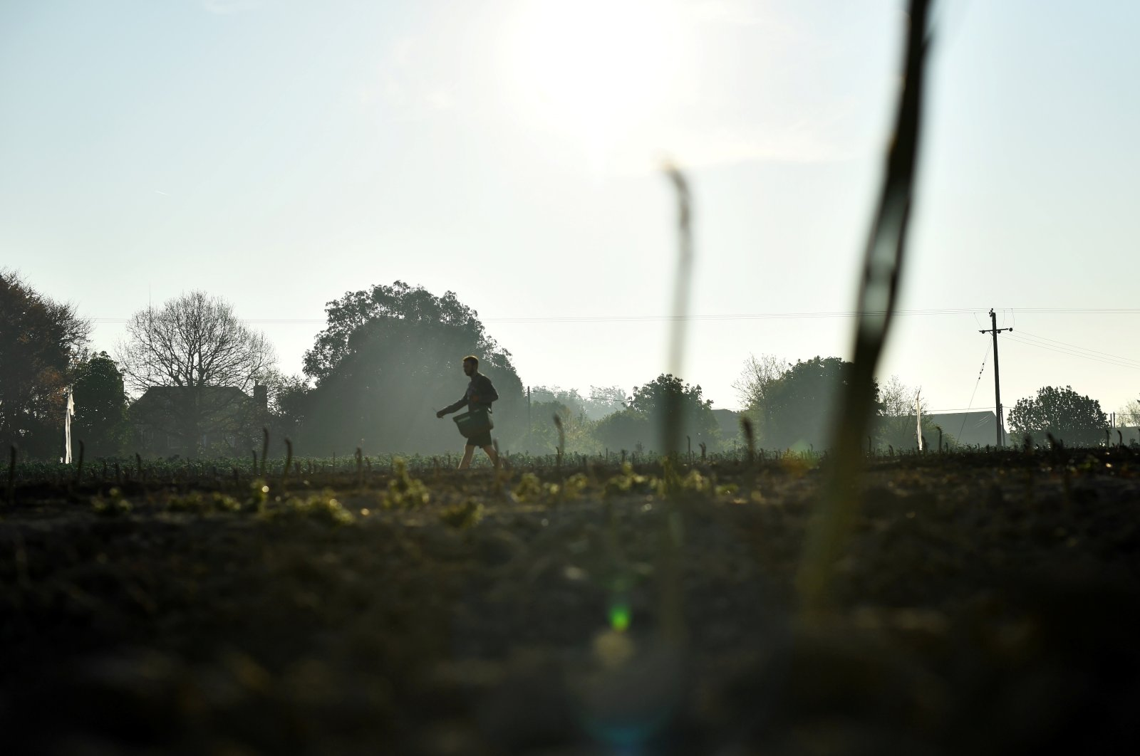 Local residents pick asparagus as they work at Dyas Farms, as foreign workers, the backbone of the U.K.'s agriculture force, are missing from the country's fields thanks to the coronavirus lockdown, in Sevenscore, Britain, April 16, 2020. (Reuters Photo)