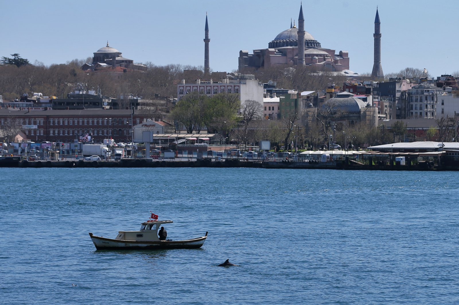 A dolphin is seen next to a fishing boat in the Golden Horn off the Karaköy district of Istanbul, Turkey, April 16, 2020. (AA Photo)