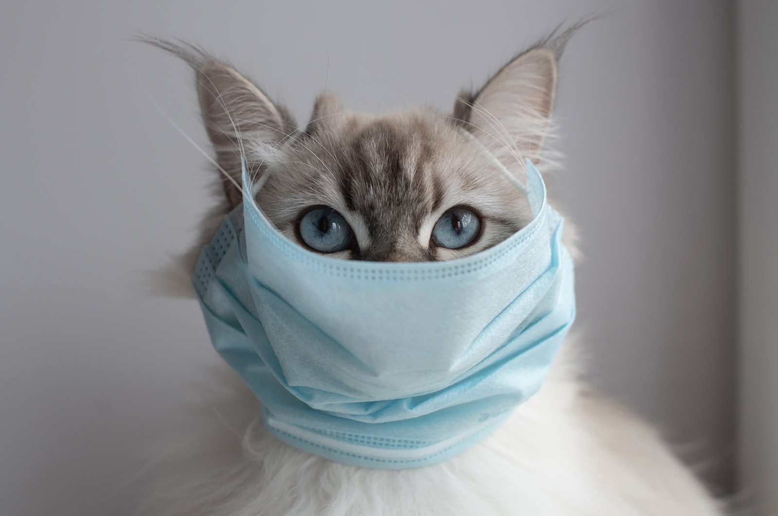 There is no evidence that pets spread the coronavirus to people. (Shutterstock Photo)