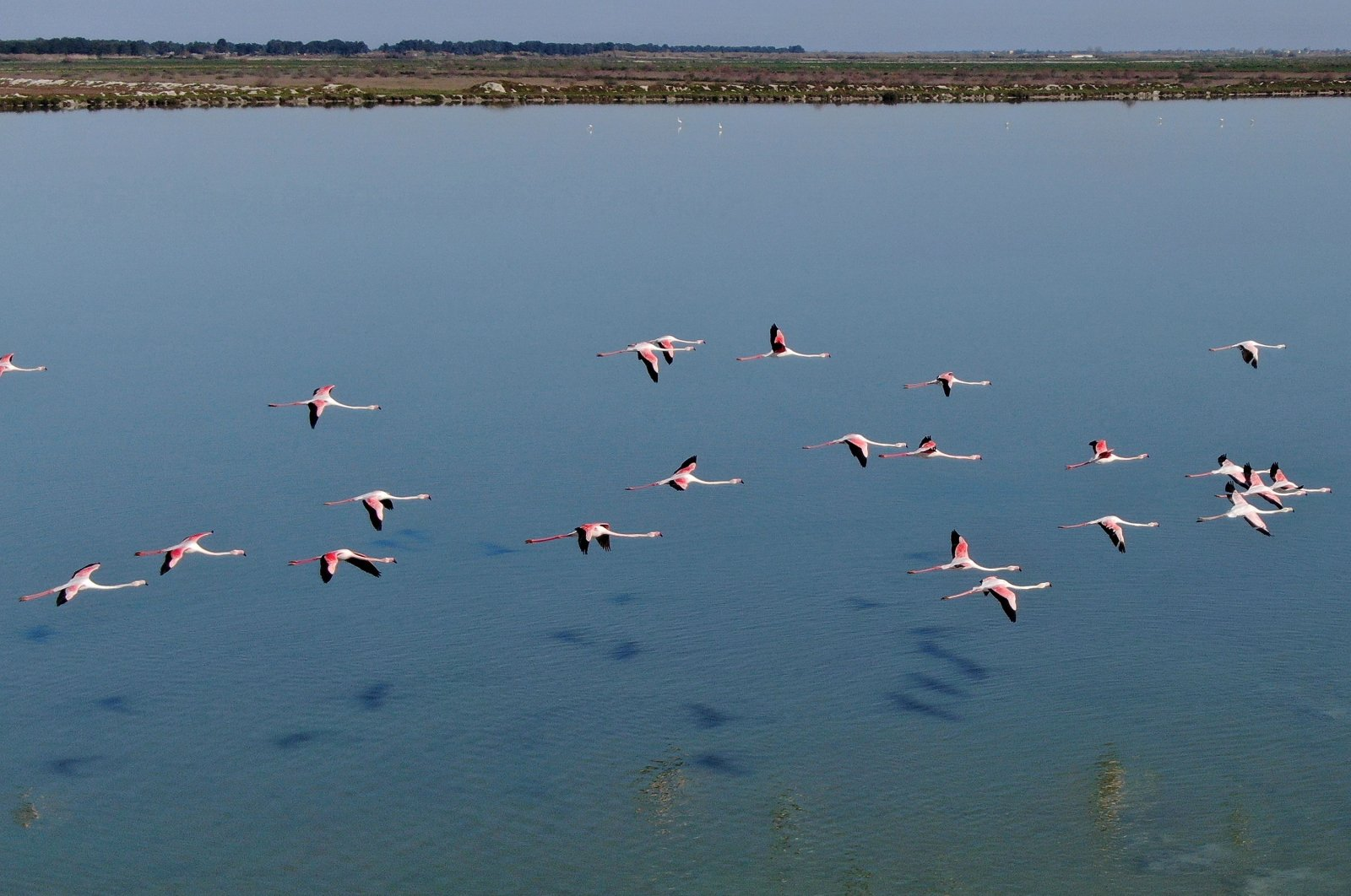 Flamingos fly over the Narta Lagoon, near the city of Vlora in the south of Albania on April 9, 2020. (AFP Photo)