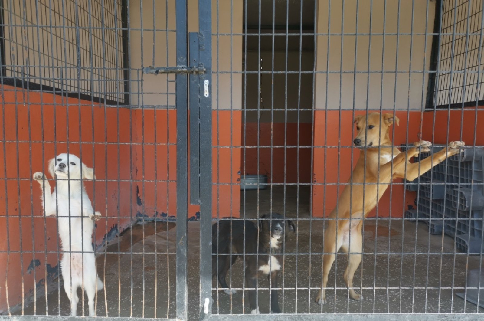 Dogs at an animal shelter in Avcılar district in Istanbul, Turkey, April 24, 2020. (DHA Photo)