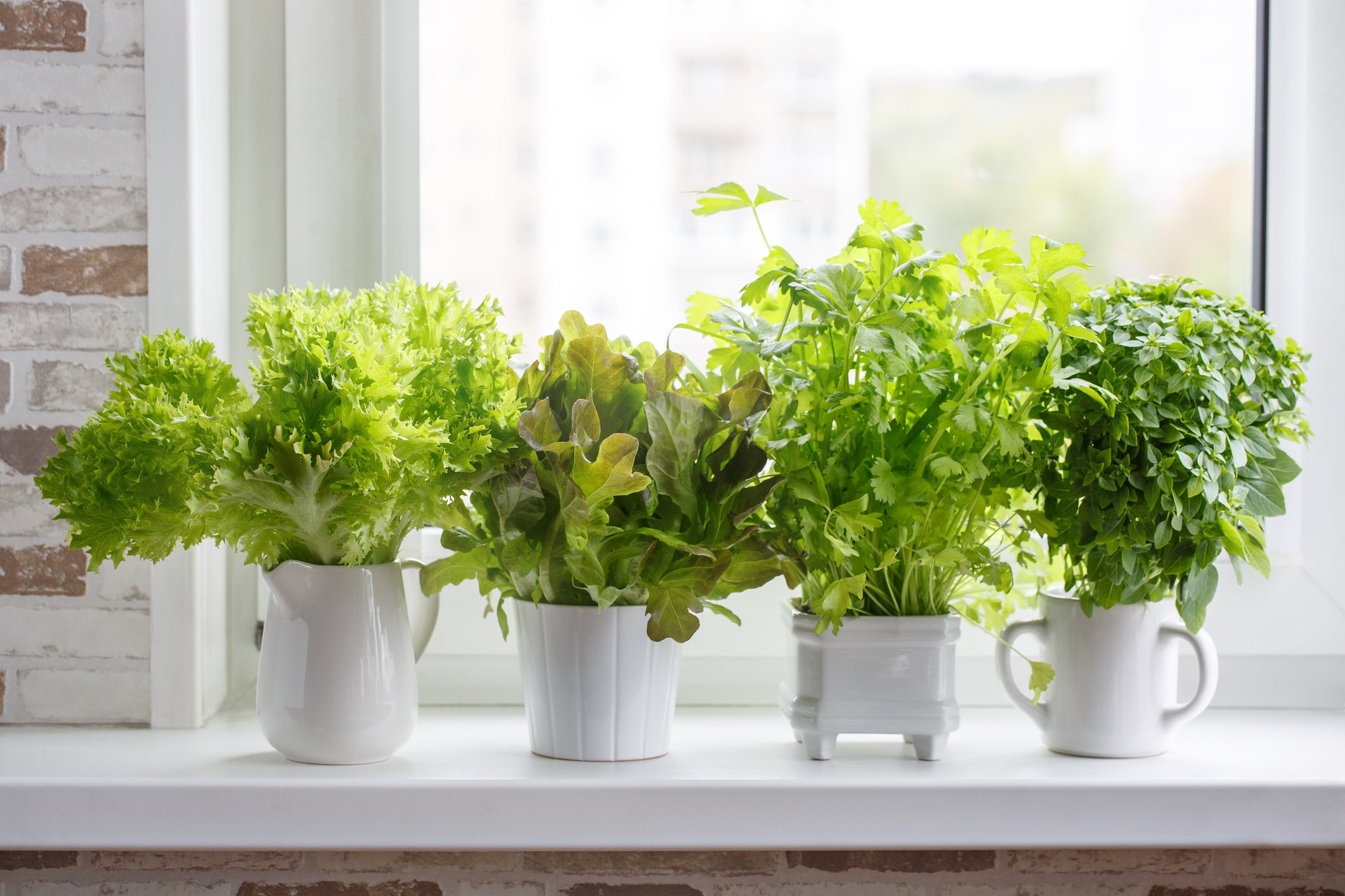 You can create your own kitchen garden of herbs with all sorts of herbs. (iStock Photo)