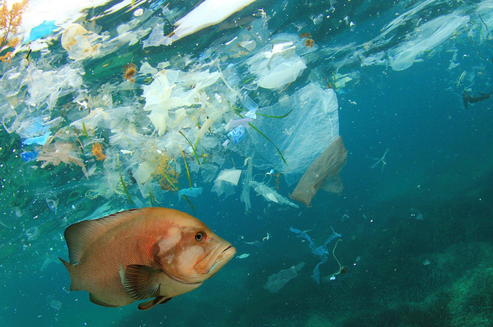 A fish swimming in a sea of plastic (Shutterstock Photo)