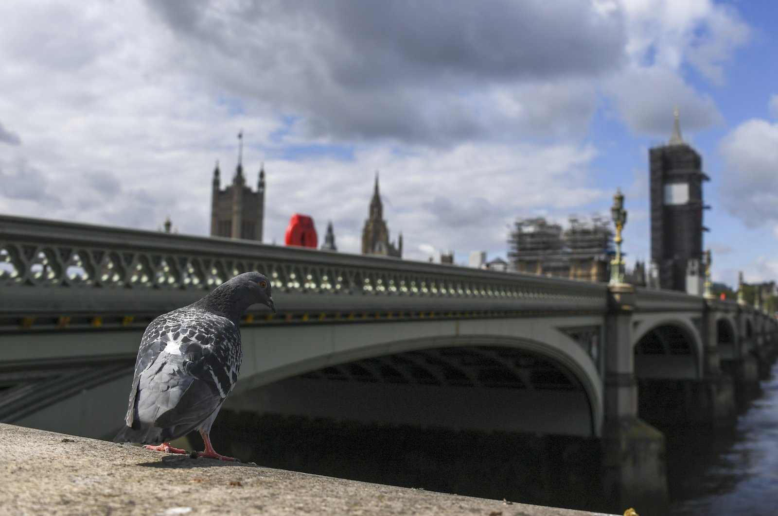 A pigeon stands on the south bank of the river Thames, against the backdrop of the Houses of Parliament, as the country continues its lockdown to curb the spread of coronavirus, in London, Friday, May 1, 2020. (AP Photo)