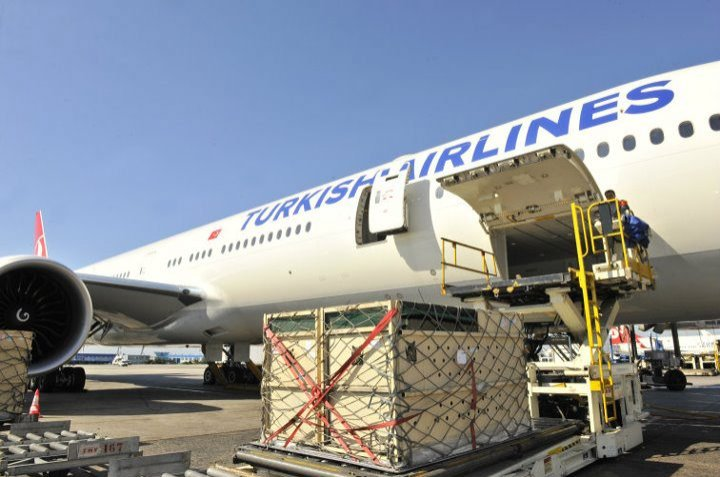Flag carrier THY's subsidiary Turkish Cargo will not carry wild, exotic animals to prevent the spread of the novel coronavirus. (File Photo)