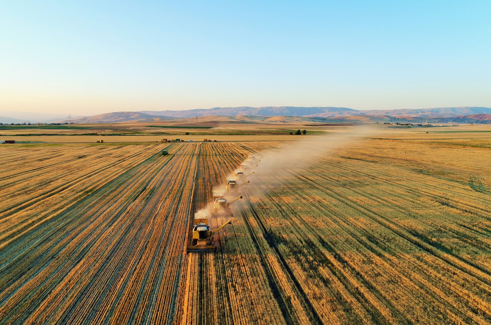Farmers harvest in one of Turkey's most fruitful cereal hubs in the eastern region, Muş province, Aug. 6, 2019. (AA Photo)