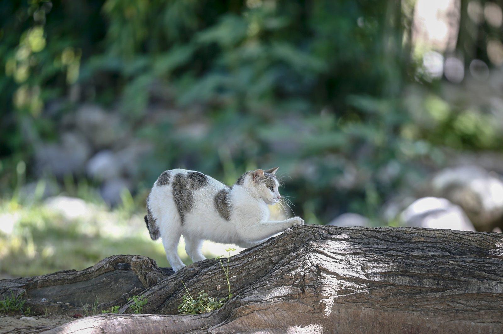A cat seen in a park in Antalya, Turkey, May 11, 2020. (AA Photo)