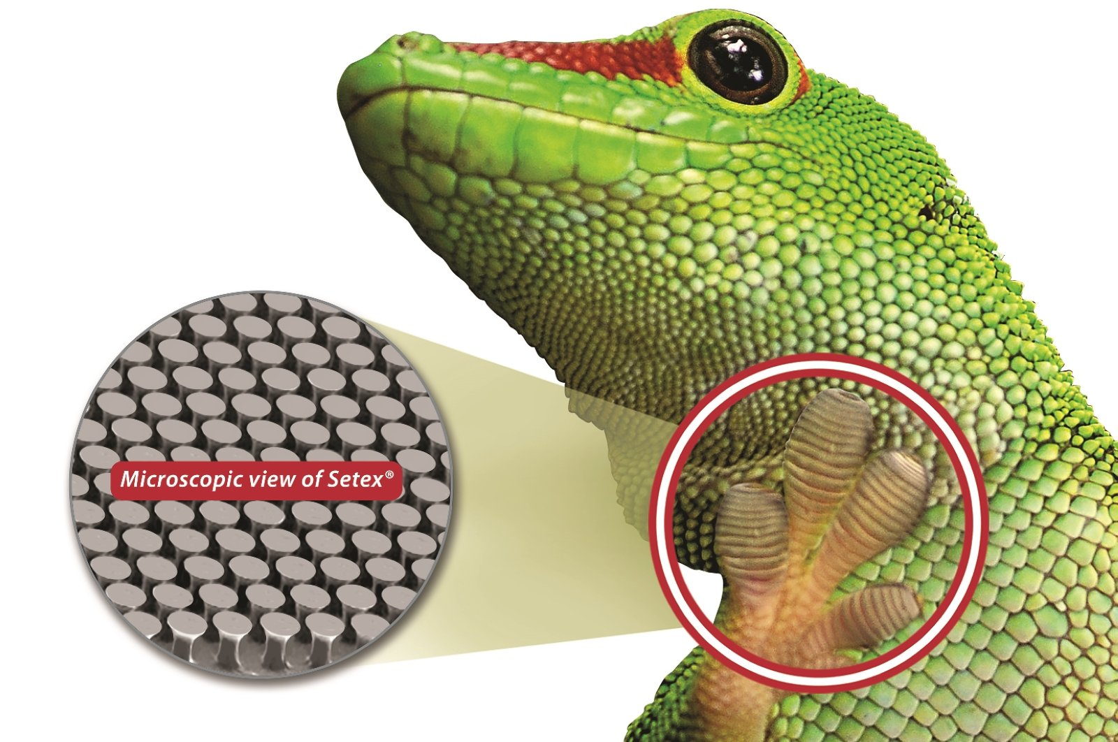 nanoGriptech is the first commercial manufacturer of gecko-inspired micro-structured dry adhesive ad surfaces for a wide range of applications.