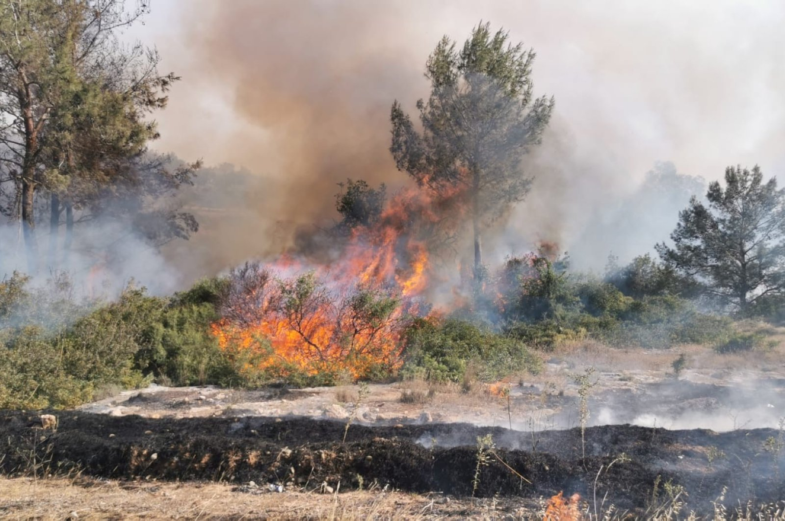 Wildfires burn trees in the Cypriot town of Girne, Turkish Republic of Northern Cyprus, May 17, 2020. (IHA Photo)
