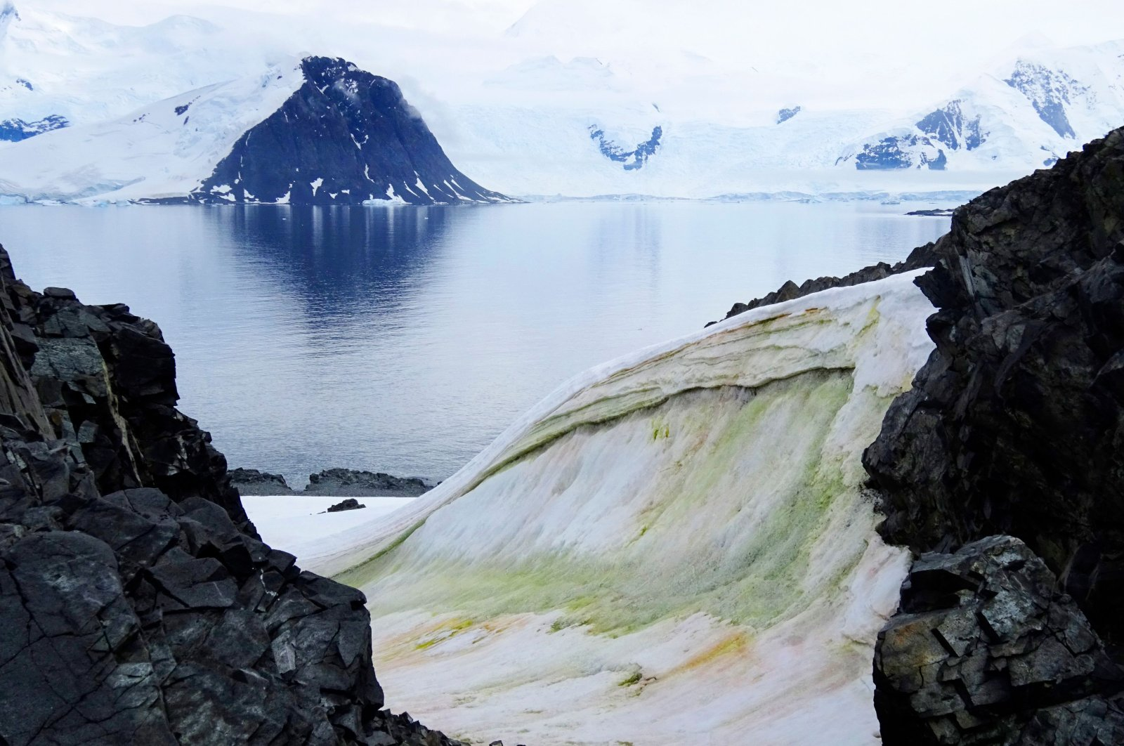 This handout picture taken in 2018 and released by the University of Cambridge shows multi-colored snow algae on Anchorage Island, in Antarctica, 2018. (AFP Photo)