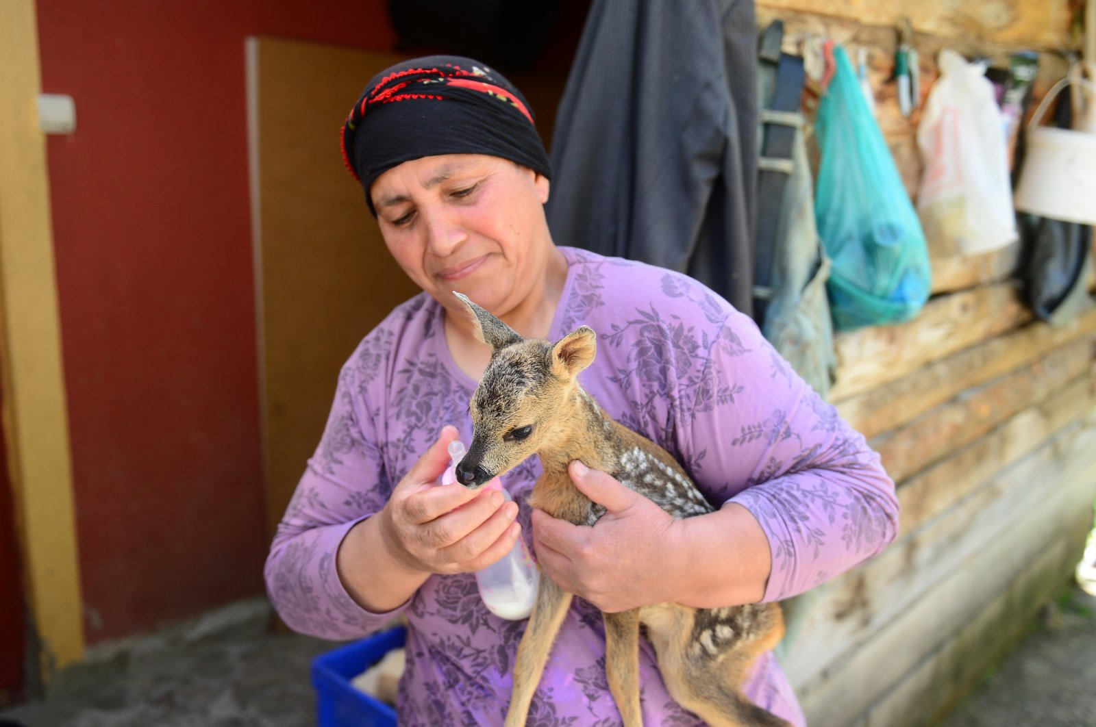 Nimet Dizdar feeds milk to a fawn in this undated photo taken at her home in Giresun, Turkey. (AA Photo)