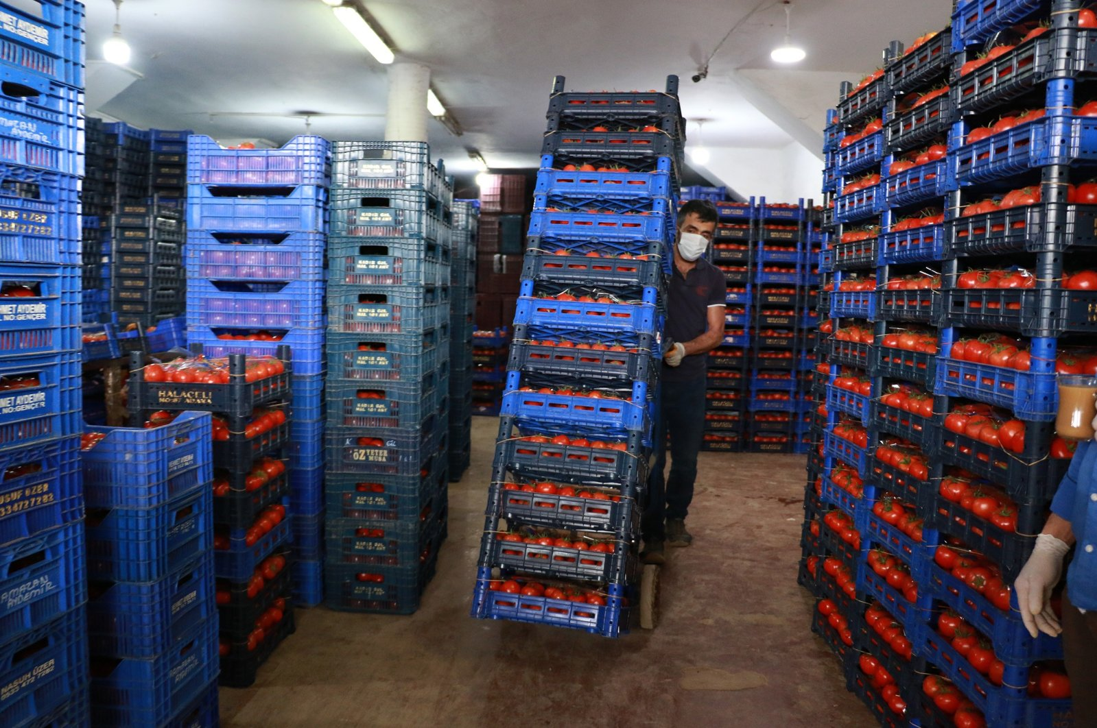 Workers load tomatoes in Turkey's southern province of Antalya, April 9, 2020. (İHA Photo)