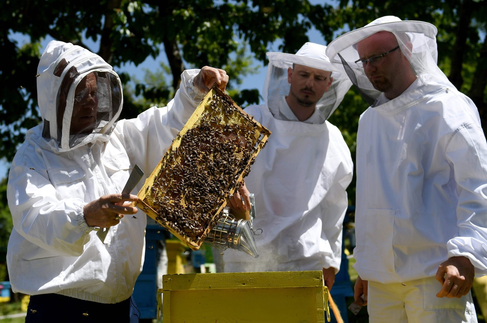 Beekeeper Gezim Skermo (L), handles a beehive's frame covered in bees at the Morava farm, in the village of Plasa, near the city of Korca, Albania on May 13, 2020. (AFP Photo)