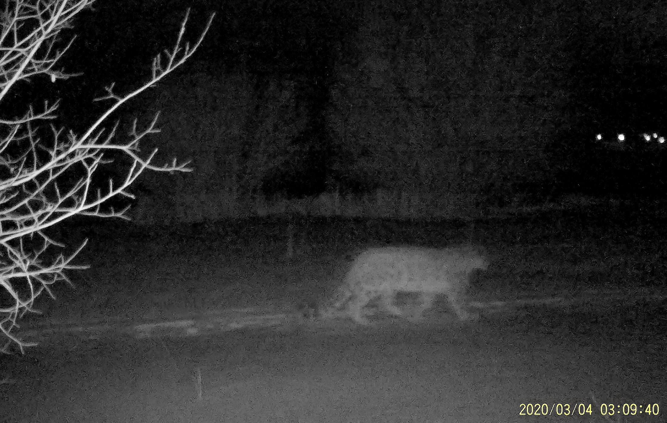 A snow leopard is filmed by a camera trap in Ile-Alatau National Park in the mountains near Almaty, Kazakhstan, in this still image from an undated handout video. (Snow Leopard Foundation/Handout via Reuters)