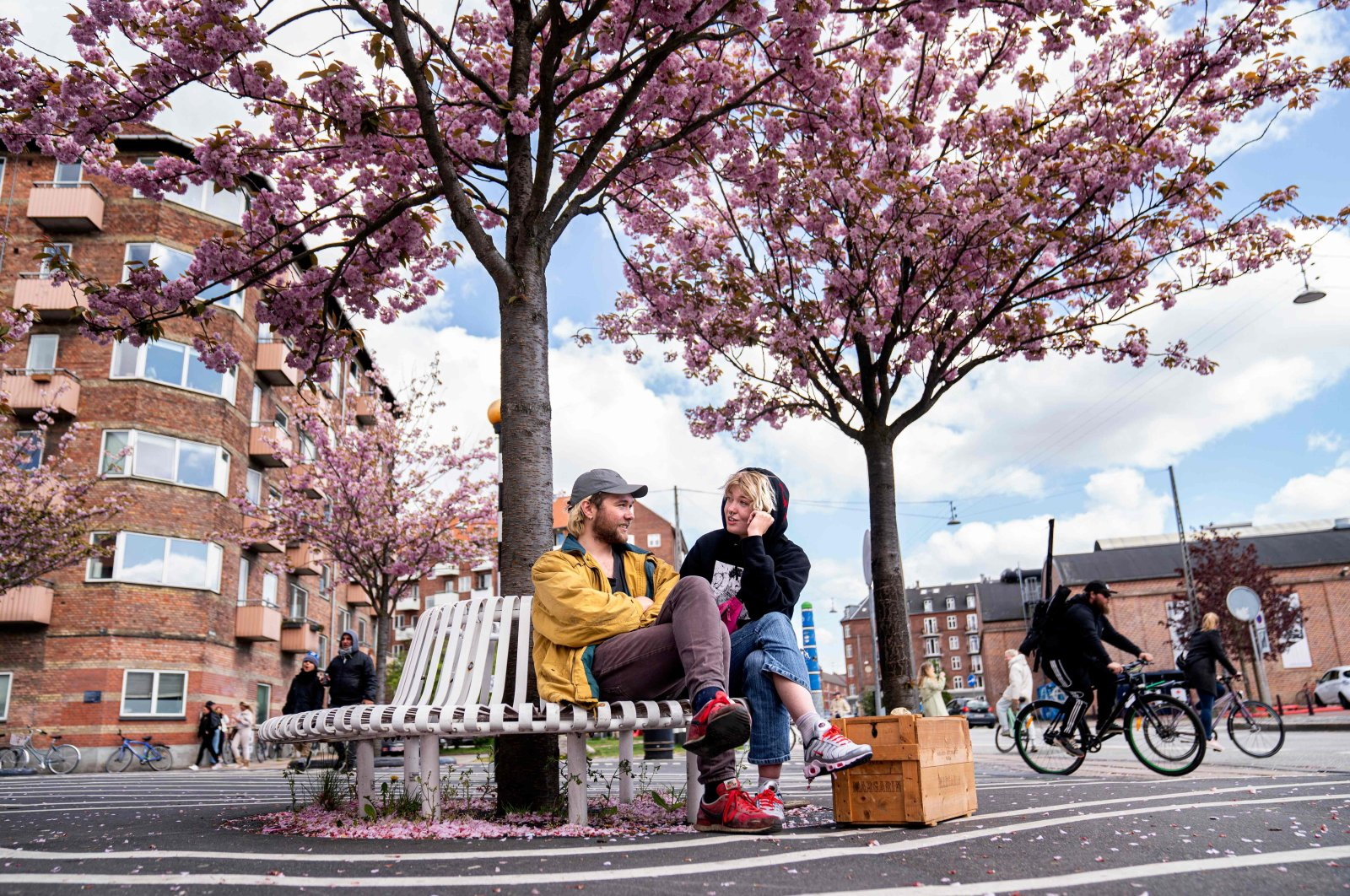 A man and woman sit on a bench under Japanese cherry trees in full bloom, Copenhagen, Denmark, May 3, 2020. (AFP Photo)