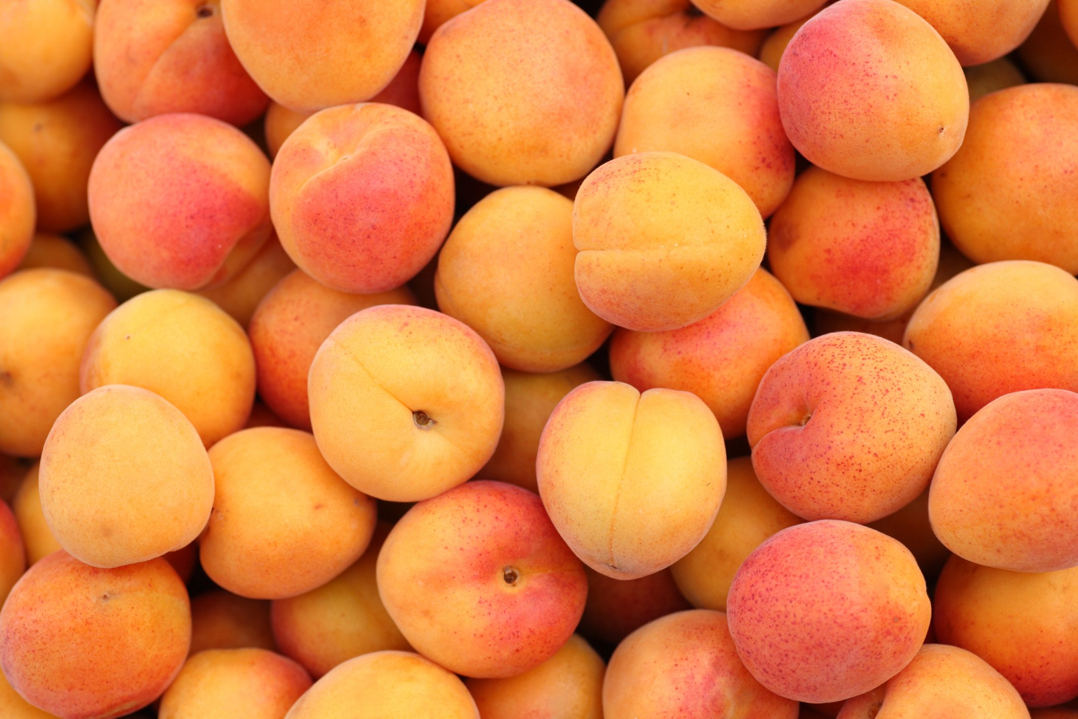 When one speaks of apricots, the first city Turks will mention is Malatya. (iStock Photo)
