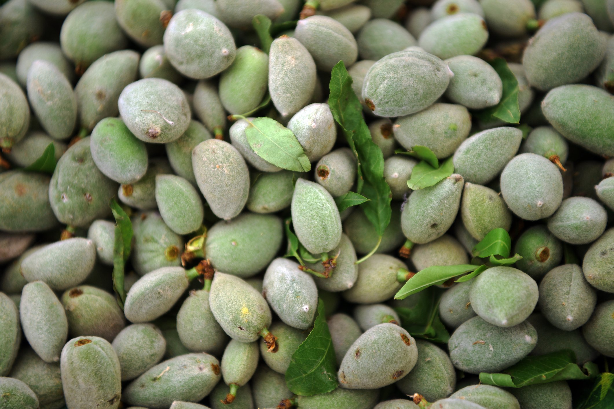 Turks in the Aegean also eat fresh green almonds with a bit of salt, as well. (iStock Photo)