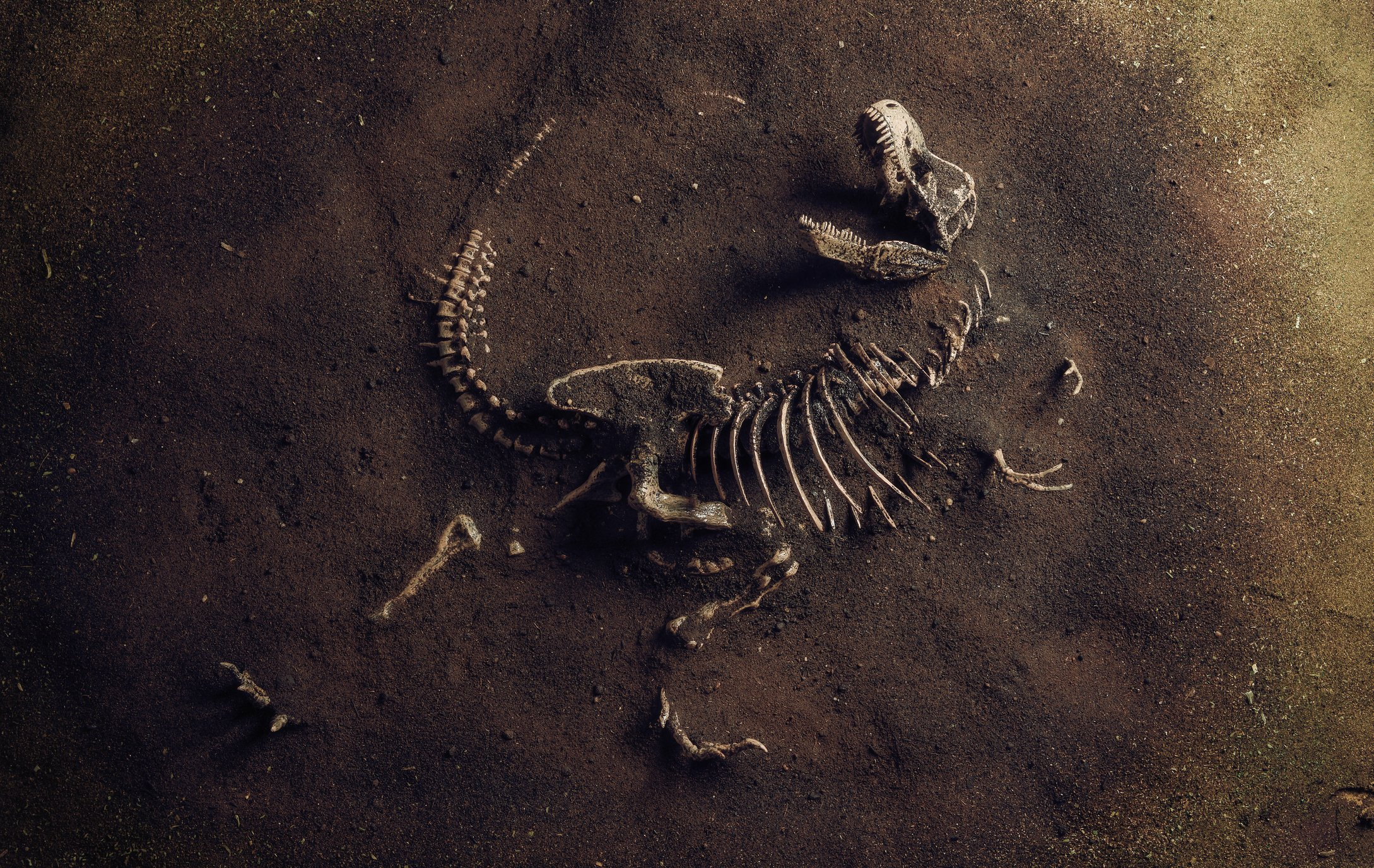 This was a very bad day for the dinosaurs, including this Tyrannosaurus rex. (iStock Photo)