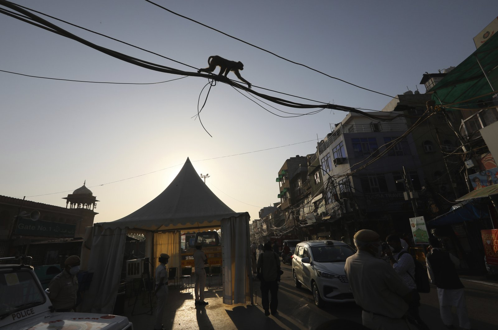 A monkey walks through power cables during Eid al-Fitr near the Jama Mosque at the old quarters of New Delhi, India, Monday, May 25, 2020. (AP Photo)