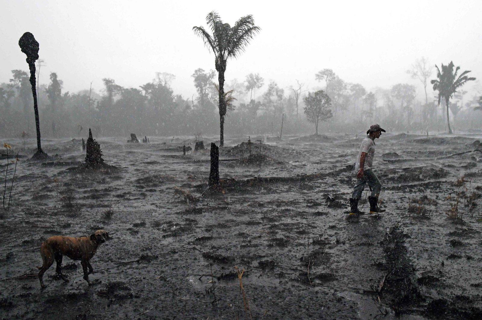 Brazilian farmer Helio Lombardo Do Santos and a dog walk through a burnt area of the Amazon rainforest, near Porto Velho, Rondonia state, Brazil, Aug. 26, 2019. (AFP Photo)