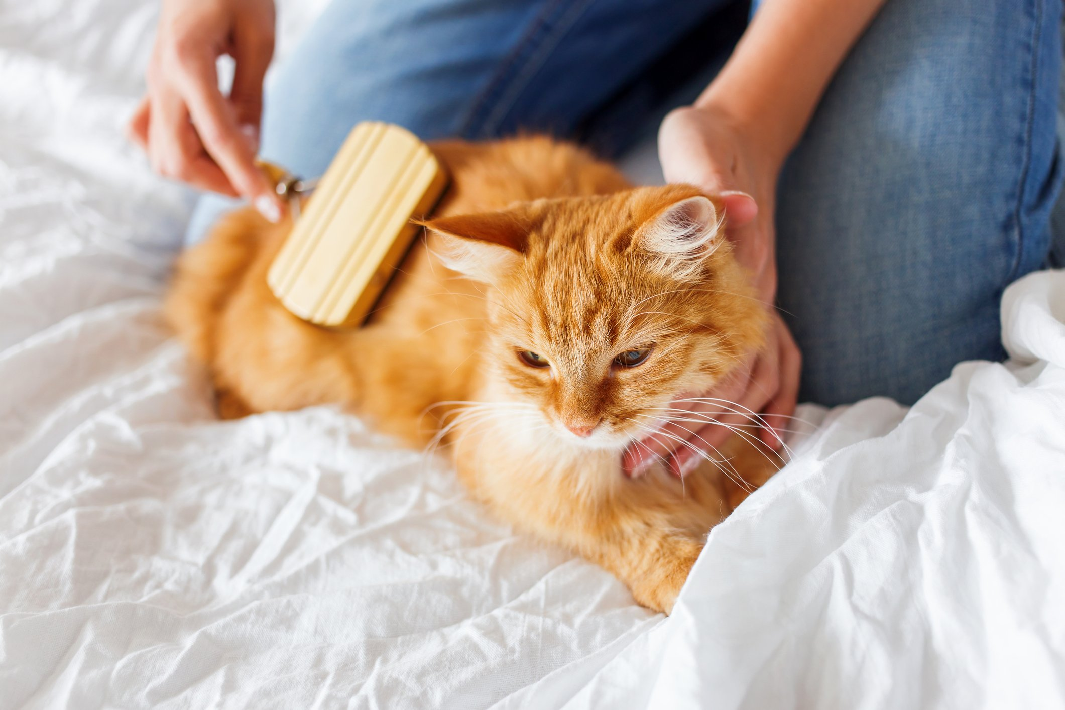 Combing and brushing your pets also helps their fur from getting tangled and matted. (iStock Photo)