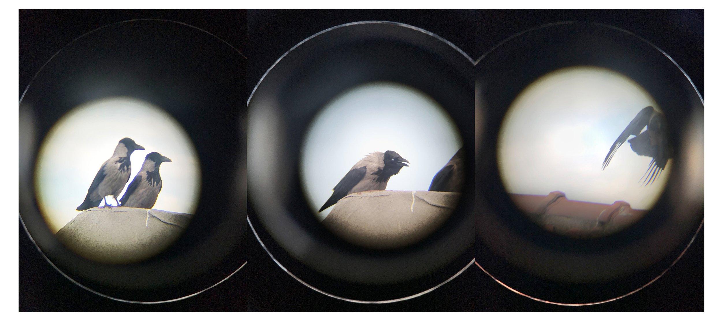 Yusuf Sevinçli, 'Crows,' May 2020, digital photograph. (Photo Courtesy of Istanbul Modern)