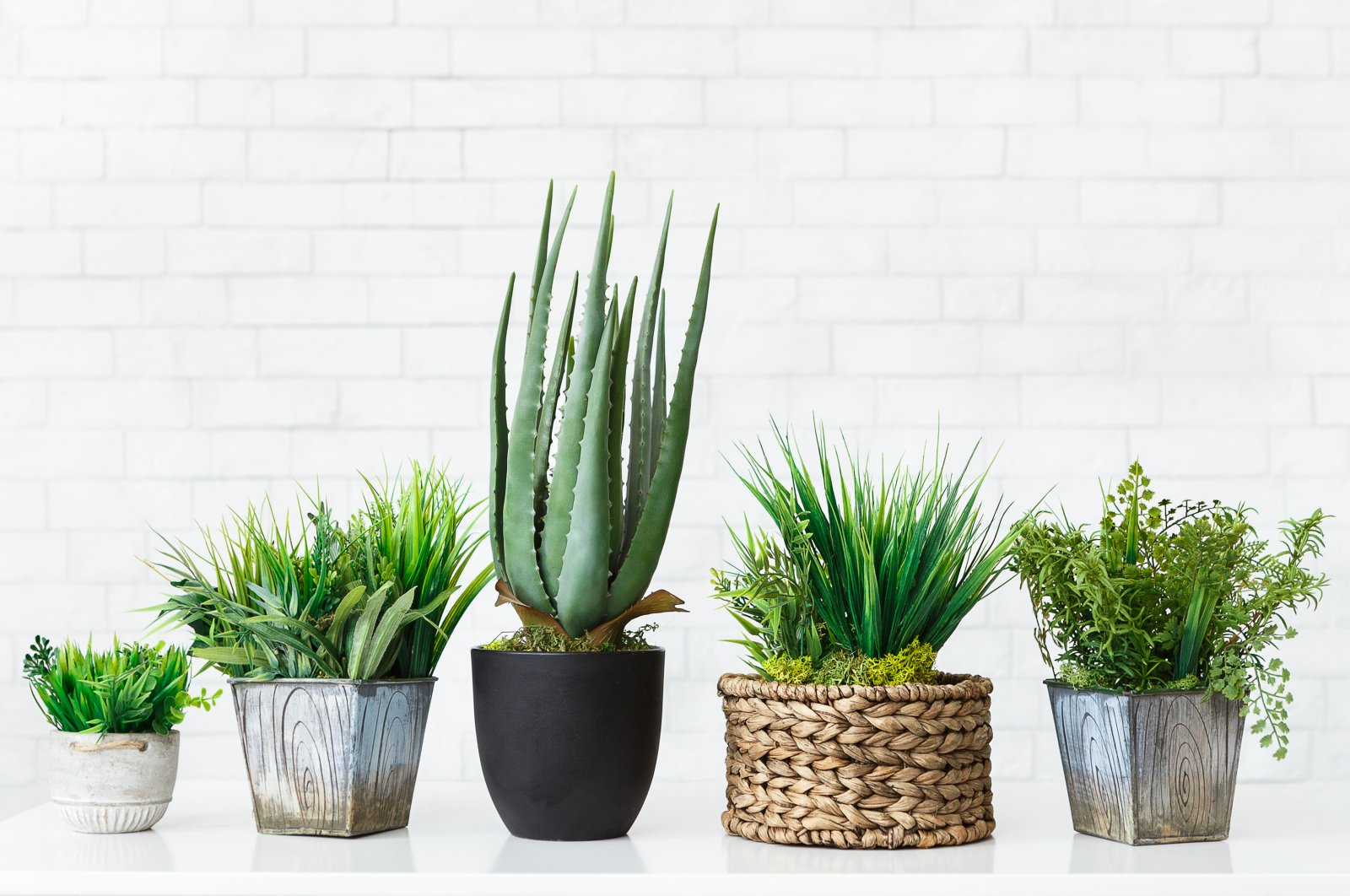 Various plants, cacti and succulents will not only change up the air at your home but also add some visual interest. (iStock Photo)