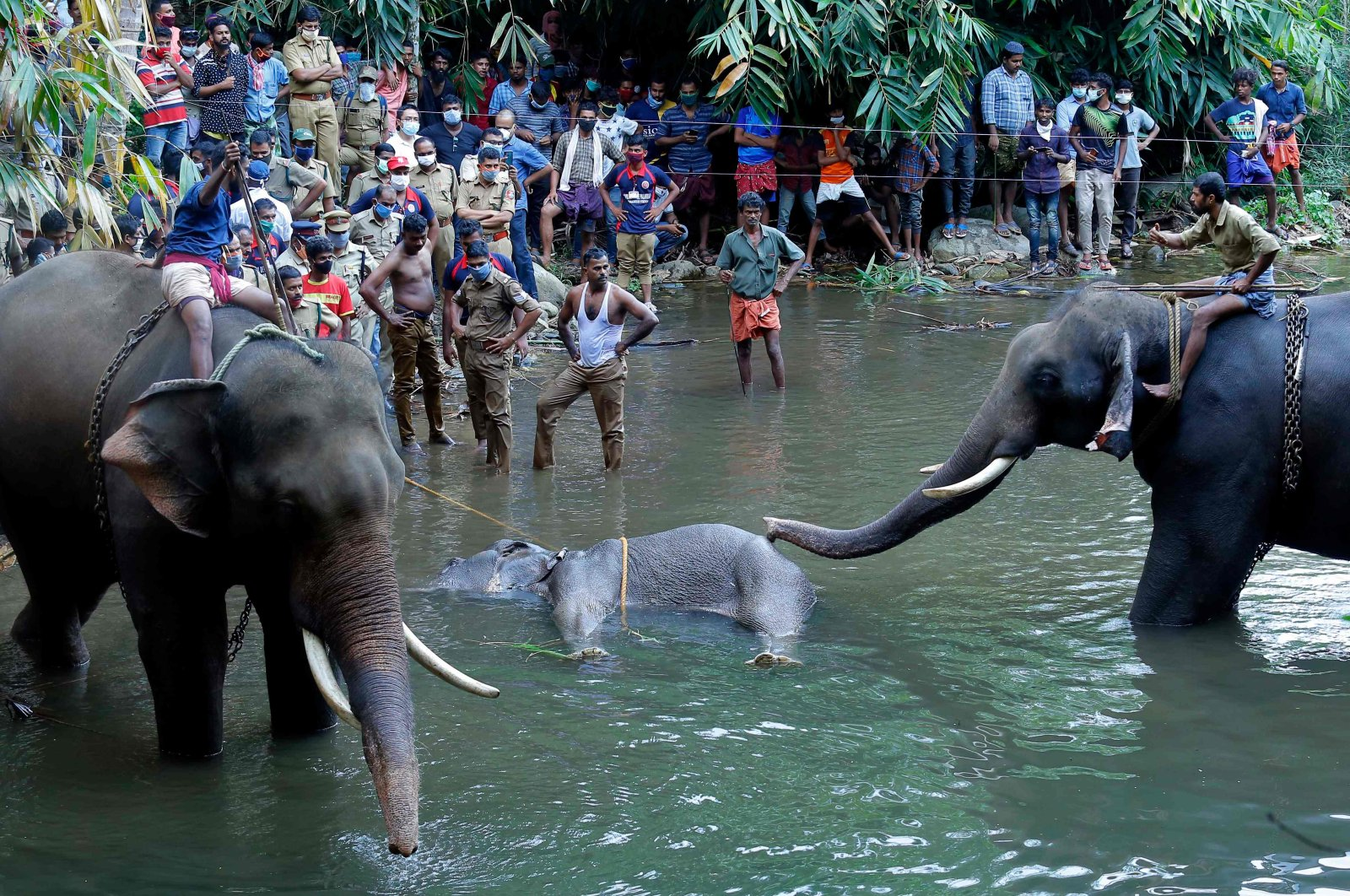 Policemen and onlookers stand on the banks of the Velliyar River in the Palakkad district of Kerala state as a dead wild elephant that was pregnant is retrieved following injuries caused by an explosive-filled pineapple, India, May 27, 2020. (AFP Photo)
