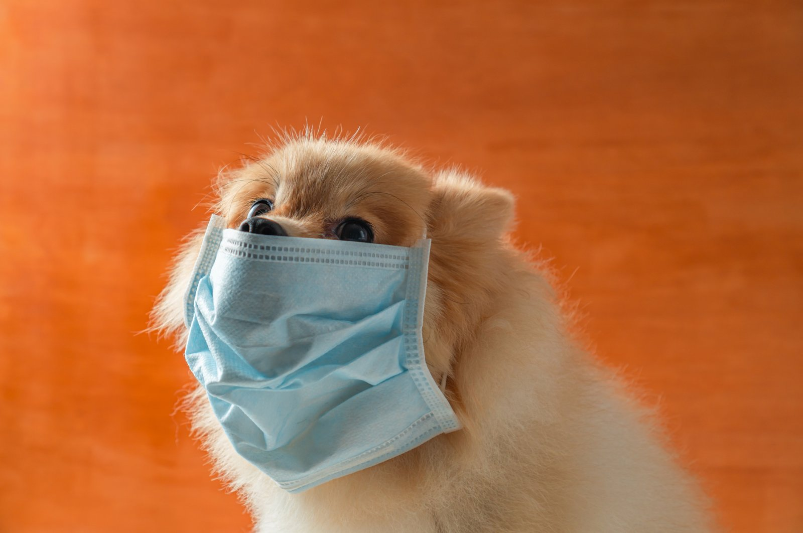 If even the very tip of your nose is poking out of that face mask to say hello, you are doing it wrong. (iStock Photo)
