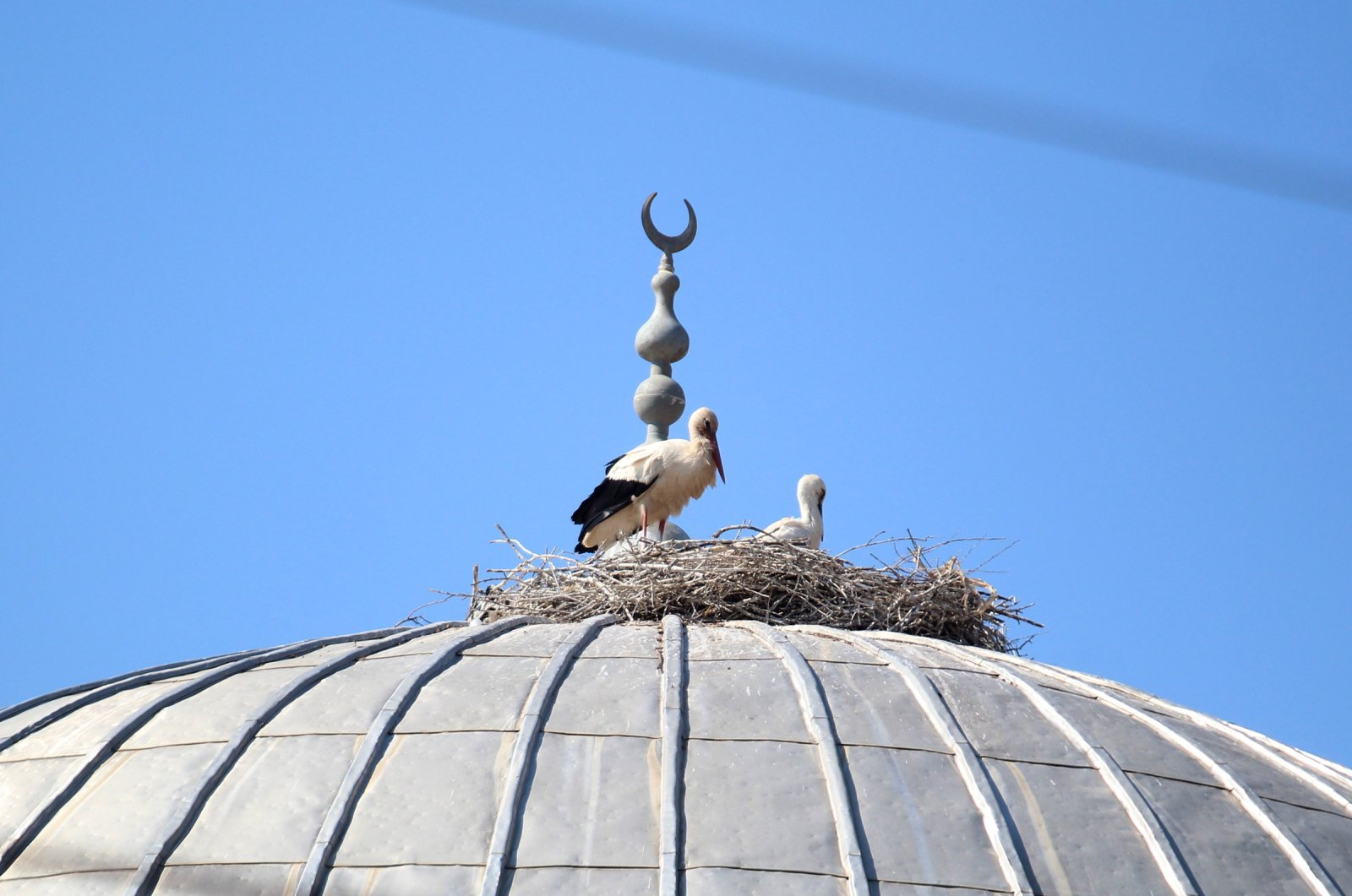 The stork pair nests on the dome of a mosque in Antalya, Turkey, June 16, 2020. (IHA Photo)