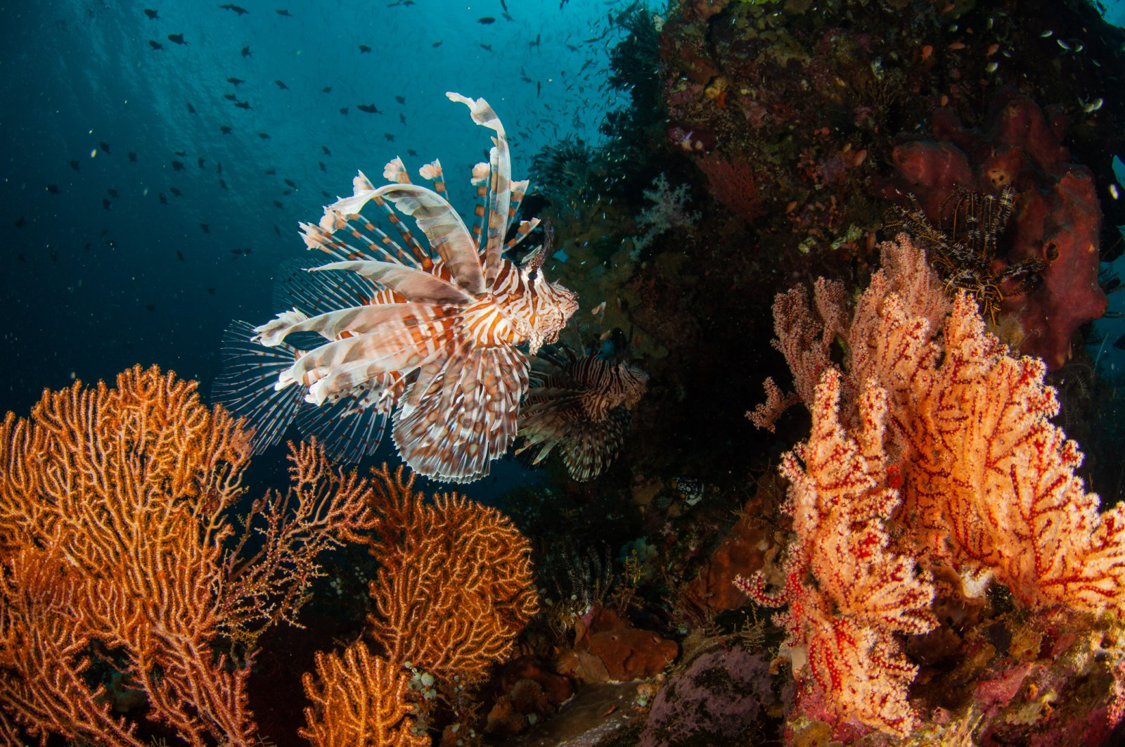 Tropical species have become dominant in some parts of the Mediterranean since they moved into the sea via the Suez Canal. (iStock Photo)